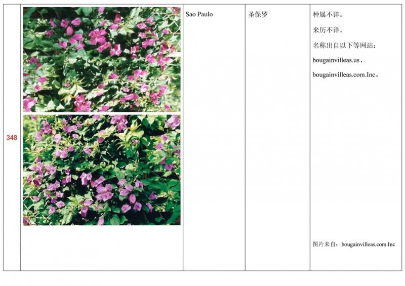 名称未核准的三角梅栽培品种收录表349.jpg