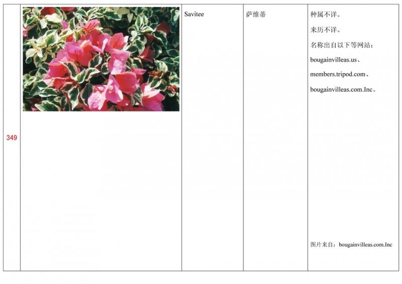 名称未核准的三角梅栽培品种收录表350.jpg