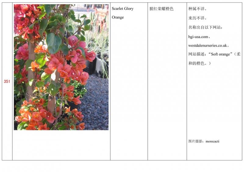 名称未核准的三角梅栽培品种收录表352.jpg