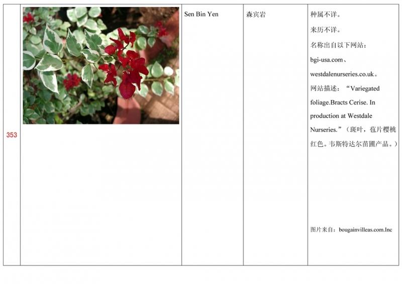 名称未核准的三角梅栽培品种收录表354.jpg