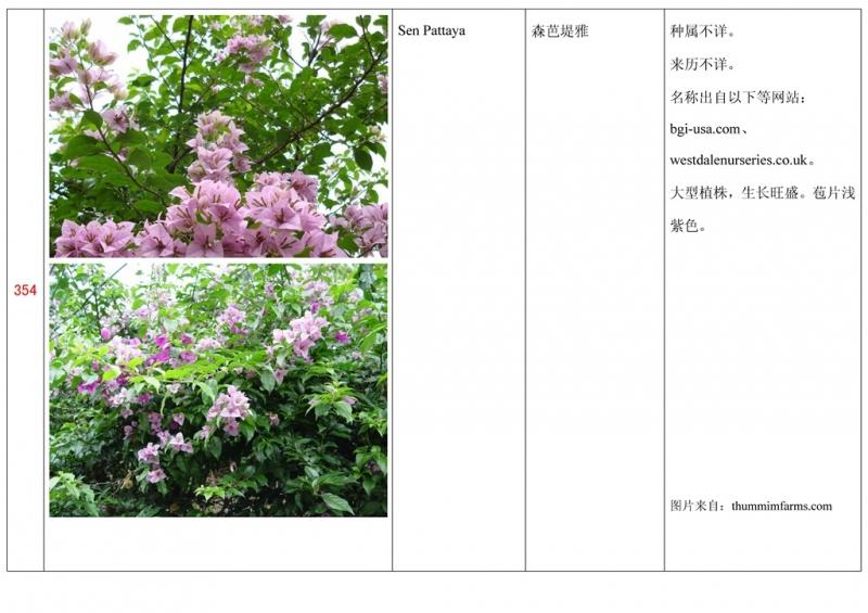 名称未核准的三角梅栽培品种收录表355.jpg
