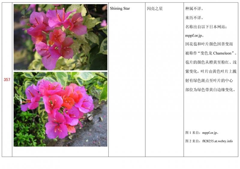名称未核准的三角梅栽培品种收录表358.jpg