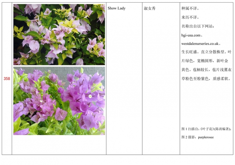 名称未核准的三角梅栽培品种收录表359.jpg