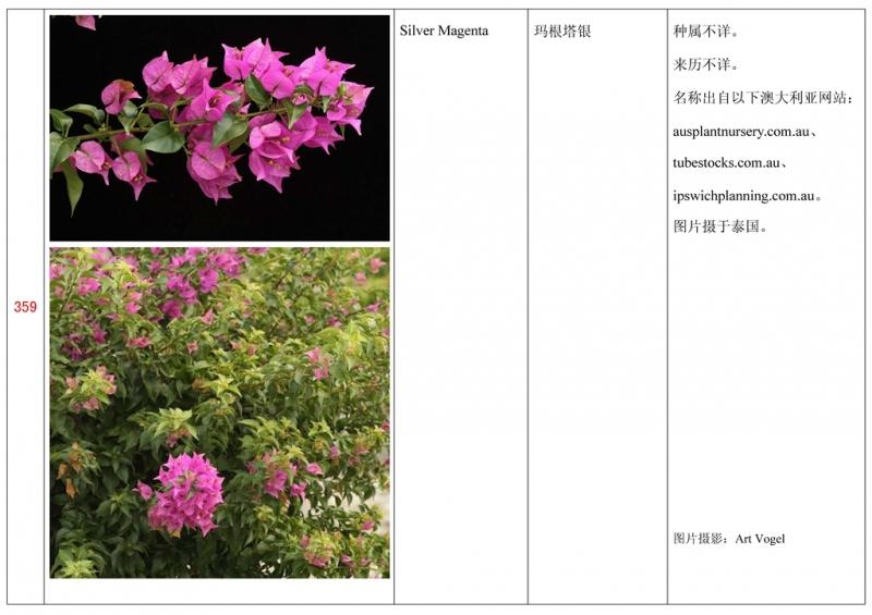 名称未核准的三角梅栽培品种收录表360.jpg