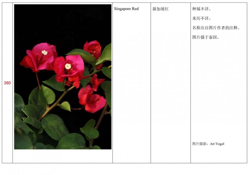名称未核准的三角梅栽培品种收录表361.jpg