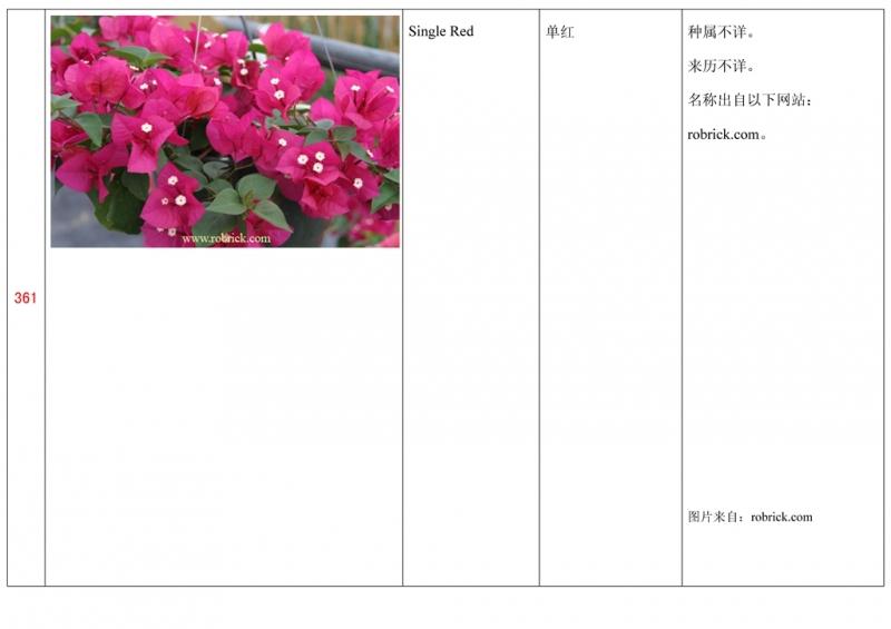 名称未核准的三角梅栽培品种收录表362.jpg
