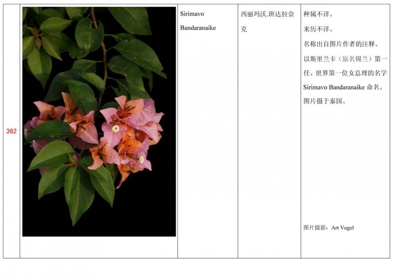 名称未核准的三角梅栽培品种收录表363.jpg