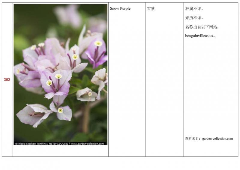 名称未核准的三角梅栽培品种收录表364.jpg
