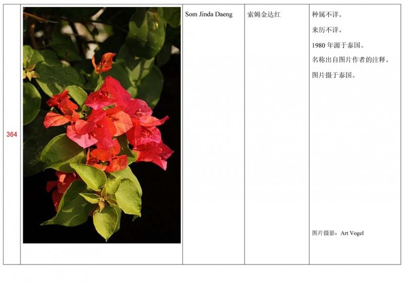 名称未核准的三角梅栽培品种收录表365.jpg