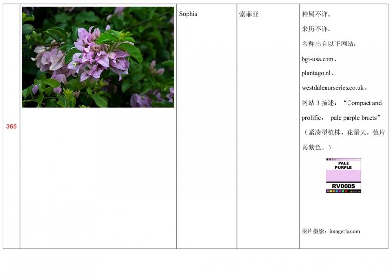 名称未核准的三角梅栽培品种收录表366.jpg