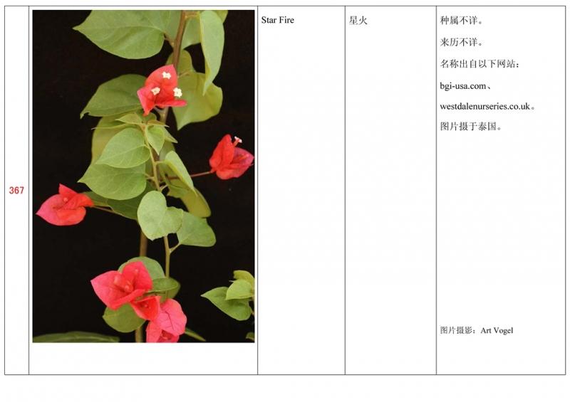 名称未核准的三角梅栽培品种收录表368.jpg