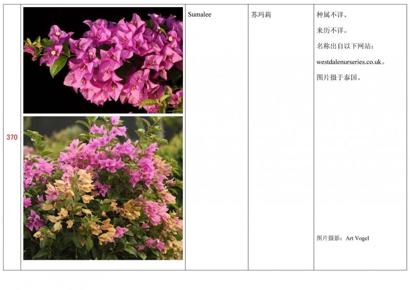 名称未核准的三角梅栽培品种收录表371.jpg