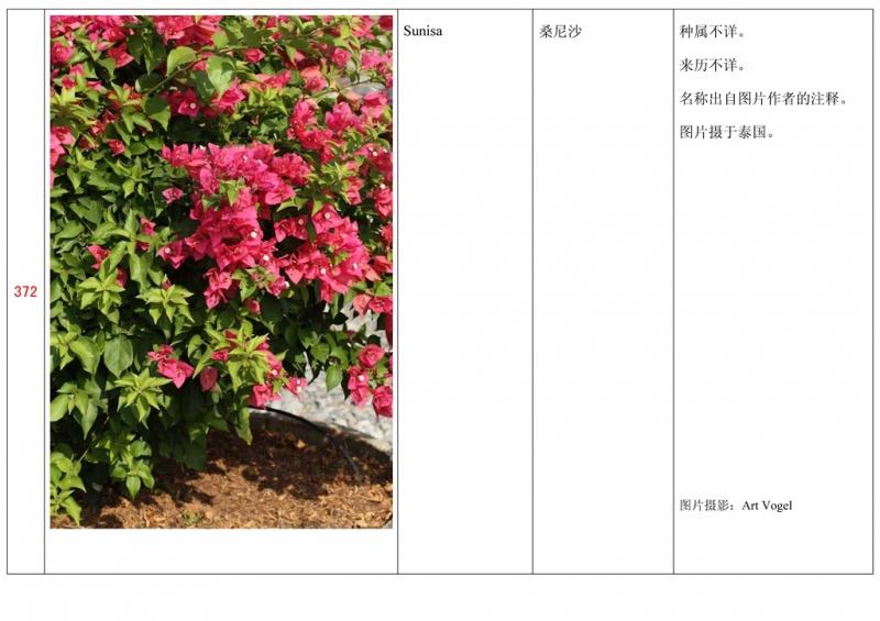 名称未核准的三角梅栽培品种收录表373.jpg