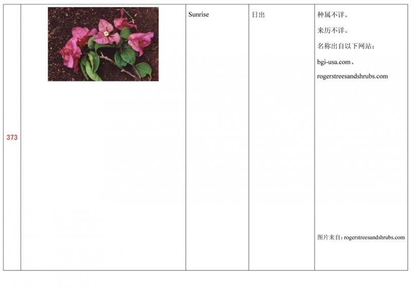 名称未核准的三角梅栽培品种收录表374.jpg
