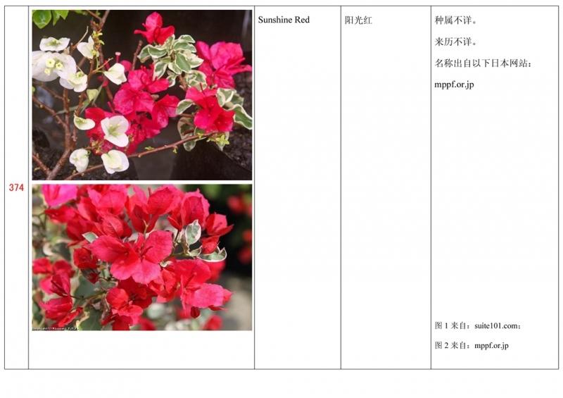 名称未核准的三角梅栽培品种收录表375.jpg