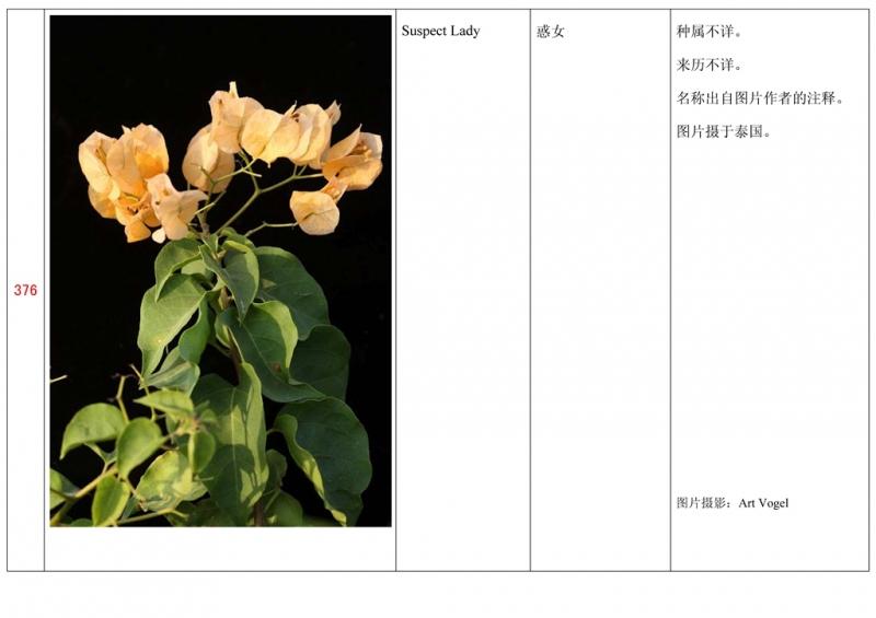 名称未核准的三角梅栽培品种收录表377.jpg
