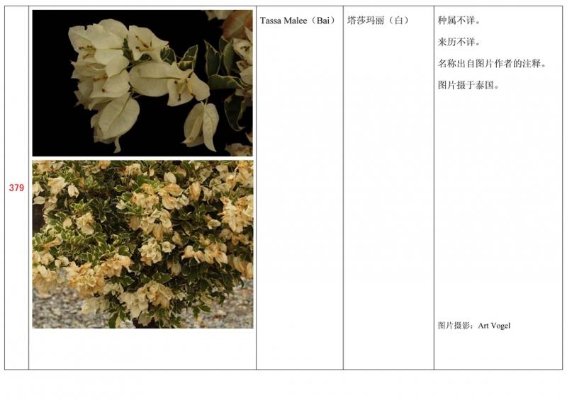 名称未核准的三角梅栽培品种收录表380.jpg