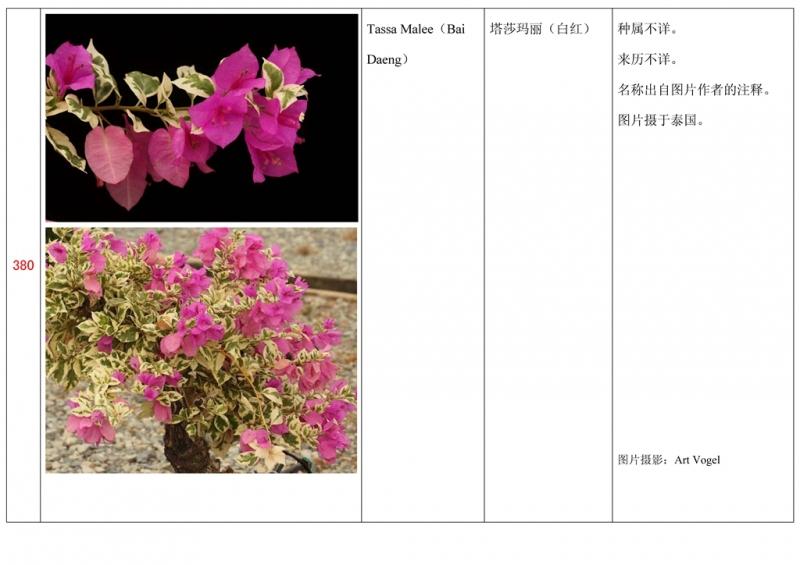 名称未核准的三角梅栽培品种收录表381.jpg