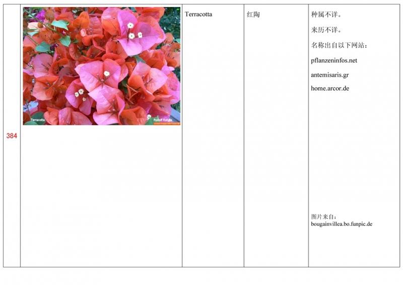 名称未核准的三角梅栽培品种收录表385.jpg