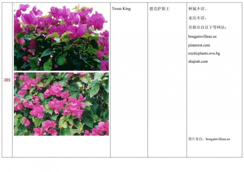 名称未核准的三角梅栽培品种收录表386.jpg