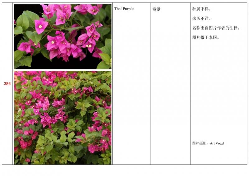名称未核准的三角梅栽培品种收录表387.jpg