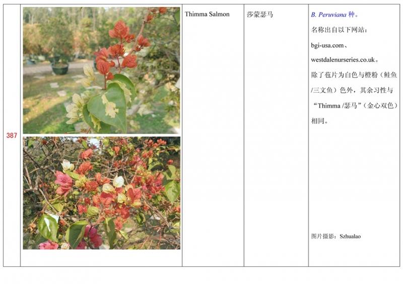 名称未核准的三角梅栽培品种收录表388.jpg