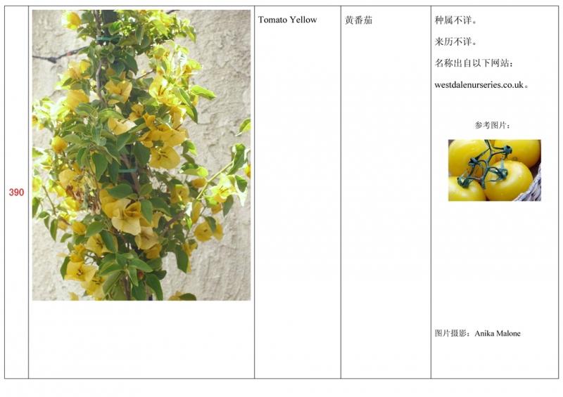 名称未核准的三角梅栽培品种收录表391.jpg