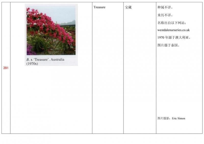 名称未核准的三角梅栽培品种收录表392.jpg