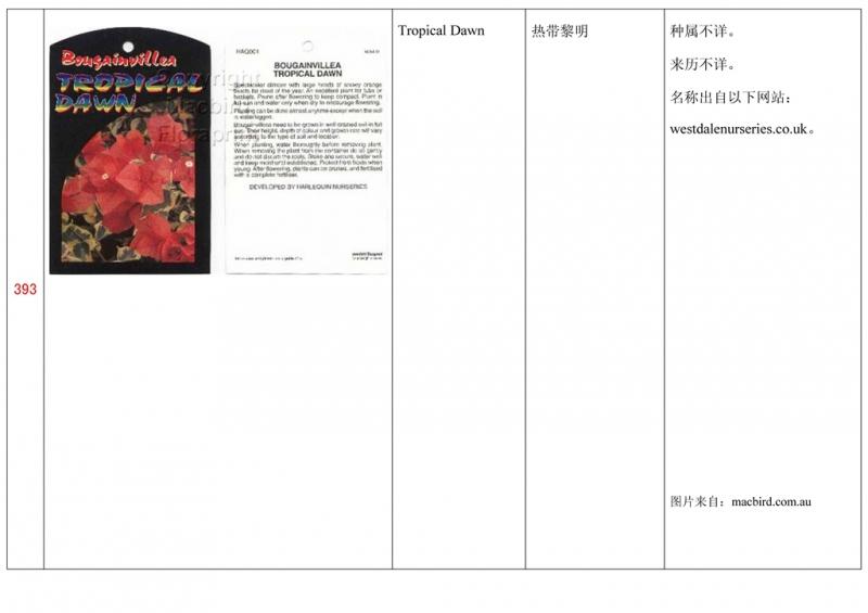 名称未核准的三角梅栽培品种收录表394.jpg