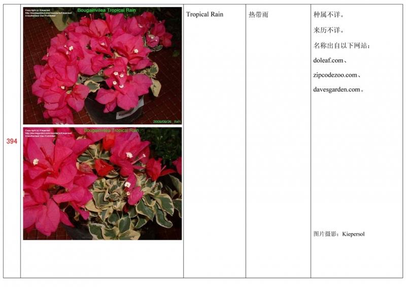名称未核准的三角梅栽培品种收录表395.jpg