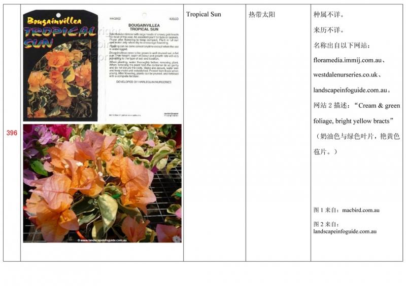 名称未核准的三角梅栽培品种收录表397.jpg