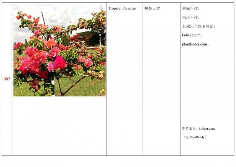 名称未核准的三角梅栽培品种收录表398.jpg