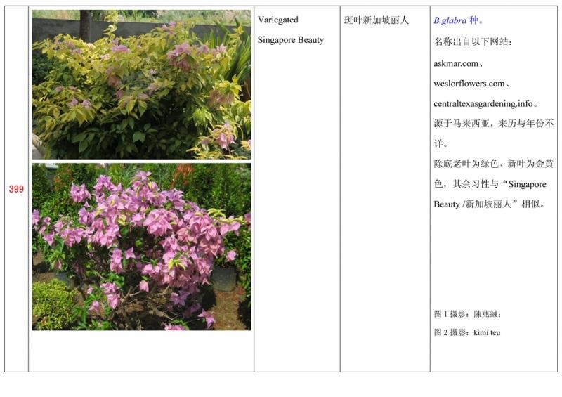 名称未核准的三角梅栽培品种收录表400.jpg