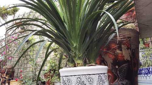 园子里不能少了最长寿的植物