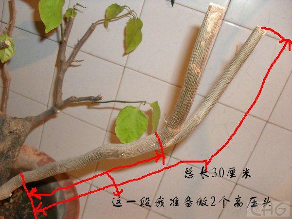SDC13324_副本.JPG