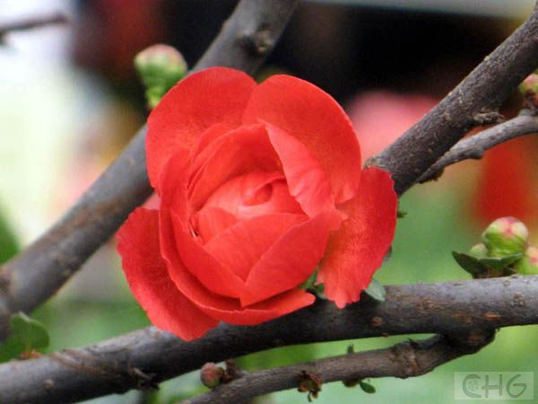 中国北方春天开的花都有哪些啊