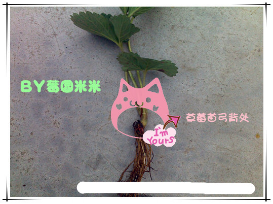 彩铅 花卉步骤图